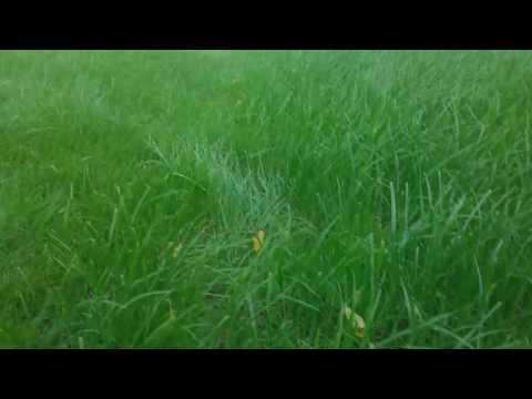 Семена газона надо перемешивать