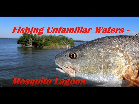 Fishing Unfamiliar Waters   Mosquito Lagoon
