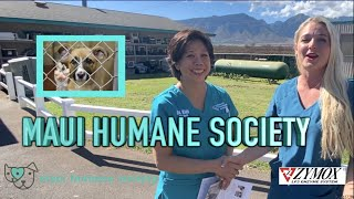 Maui Humane Society | Tour with Zymox products