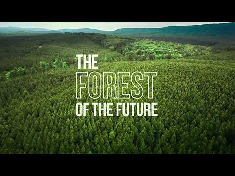 The Forest of the Future