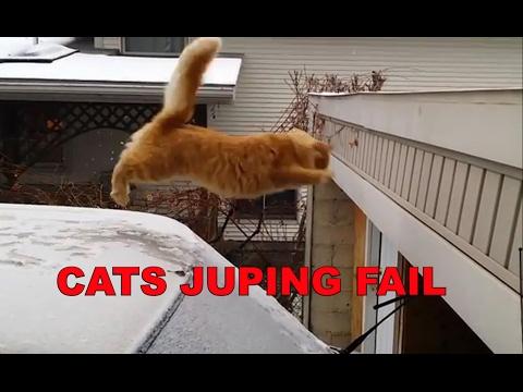 Cats Jumping Fail Videos Compilation 2017