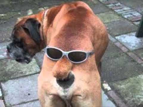Картинки по запросу כלבים מצחיקים