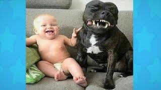 Adorable Dogs Playing With Babies - Funny Babies Compilation 2018