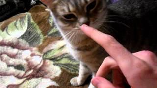 Guide #1 - Как найти кота