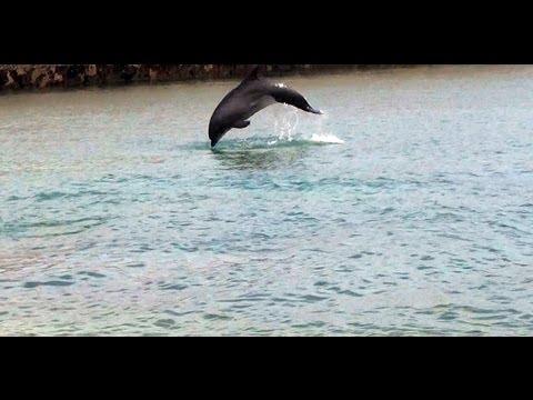 3Dリラックス イルカの泳ぐ須磨海岸 Coast swim dolphin