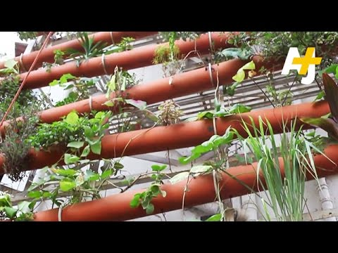 Rooftop Farmers: Greening Empty Spaces Of Mumbai