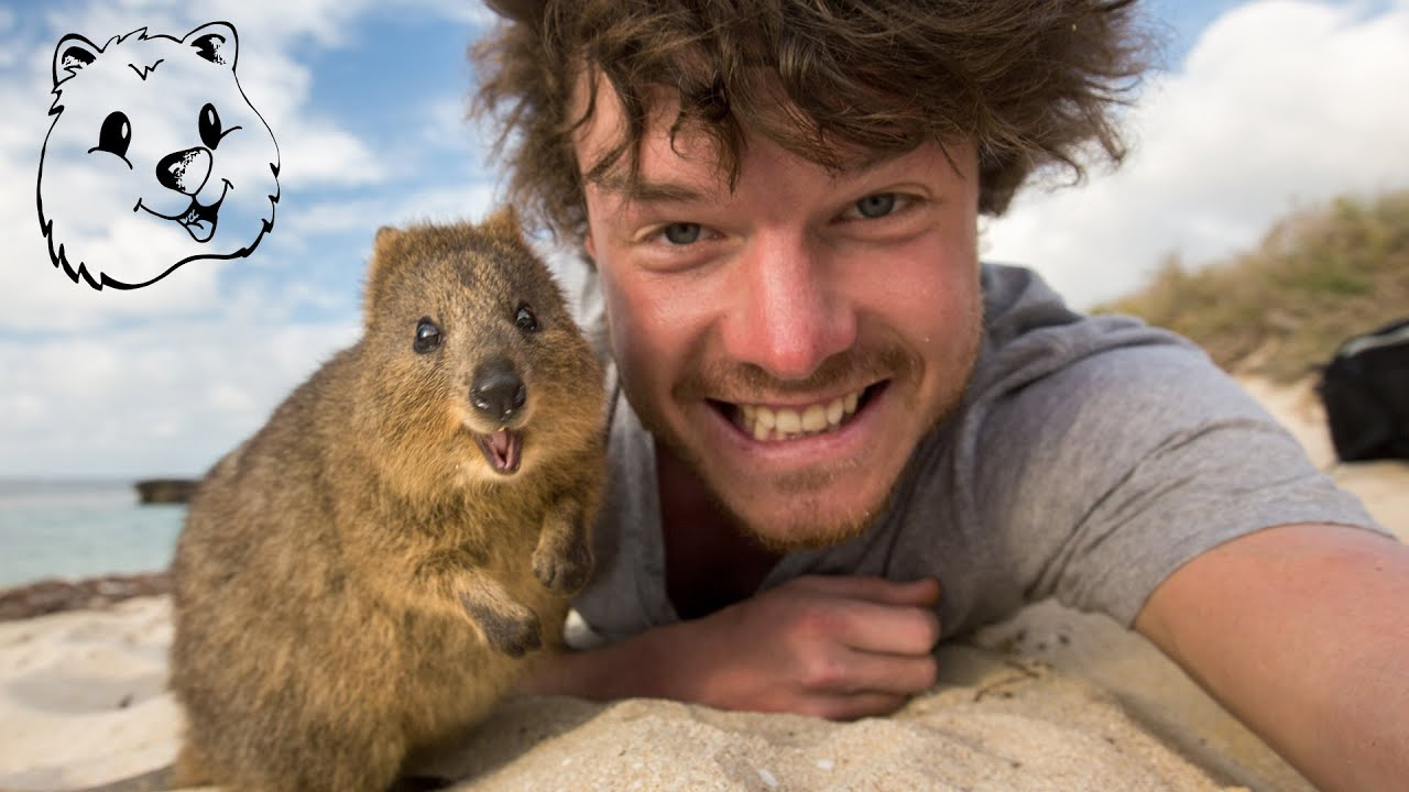 Quokka Selfie Tutorial - How to take Animal Selfies ...