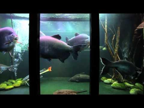 Jack Heathcote's giant tropical aquarium
