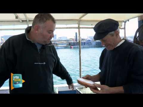 La pêche en question : Collaboration scientifiques-pêcheurs