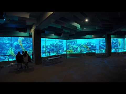 Full Walkthrough of San Diego Zoo Africa Rocks Exhibit