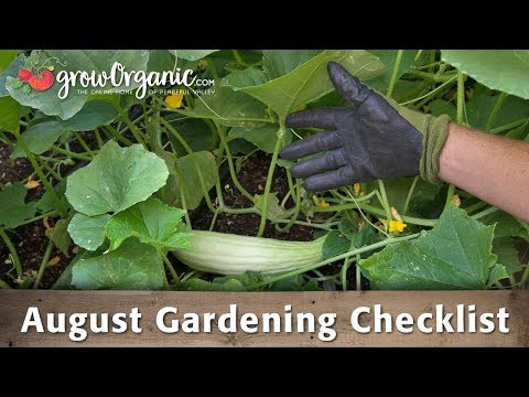 August Gardening Checklist - 20 Tips to Maintain Your Organic Garden