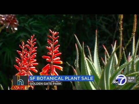 Coming Up: 50th Annual Plant Sale, Baile en la Calle and Wine, Women & Shoes.