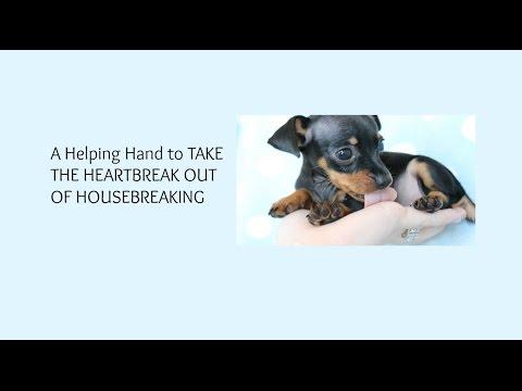 how-to-potty-train-a-miniature-pinscher-puppy,-sensible-house-training-miniature-pinscher-puppies