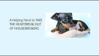 How To Potty Train A Miniature Pinscher Puppy, Sensible House Training Miniature Pinscher Puppies