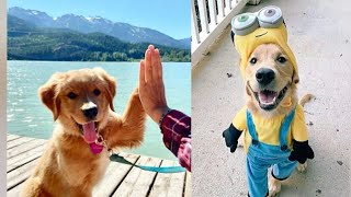 Best Funny Cute Cats And Dogs Video Compilation #38 | Funny Pets Life
