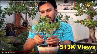How to make Ficus Bonsai (Bonsai # 2)