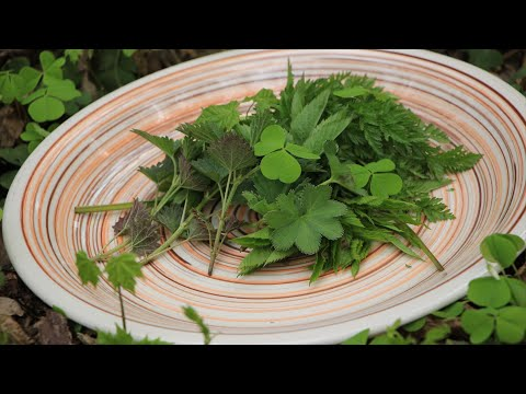 Сорняки это еда! Про употребление дикорастущих растений.