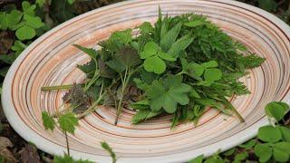 Сорняки - это еда! Про употребление дикорастущих растений.