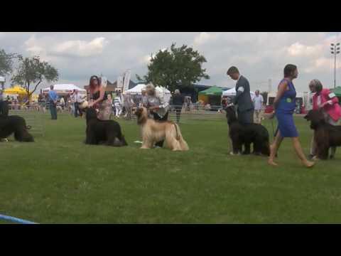 East of England Ag. Soc Ch Show 2017 - Dog Challenge
