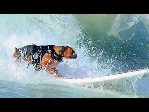 Surf Dog Hanzo's 2014 Highlight Reel