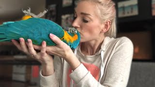 DO MACAWS MAKE GOOD PETS? | Must Knows About Macaw Parrots