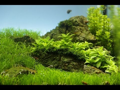 "Aquascape Maintenance ""Wanderlust/Time to wander"" 6. Woche ..."