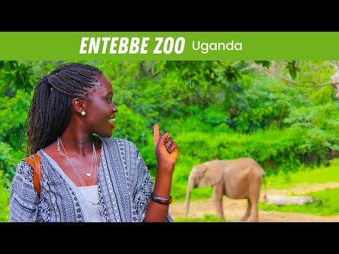 EP #60   Entebbe Zoo – UGANDA VLOG!