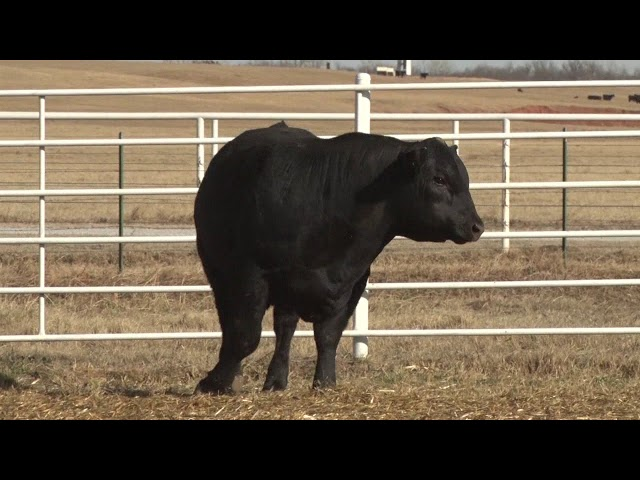 Express Ranches Lot 482