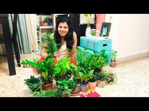 Indoor Plant Shopping Haul | Indoor Plants Decoration Ideas | Home Decor Ideas