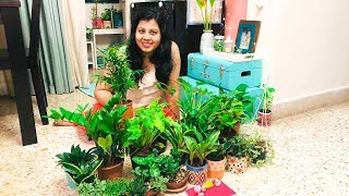 Indoor Plant Shopping Haul | Indoor Plants Decoration Ideas | Home Decor Ideas