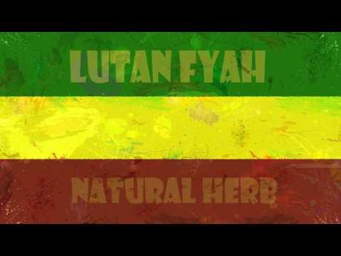 Lutan fyah natural herbs