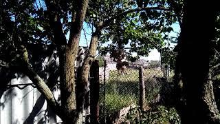 Собака  постоянно перелазить через забор