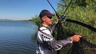 Удачная рыбалка с корабликом Дельфин. Very successful carp fishing.