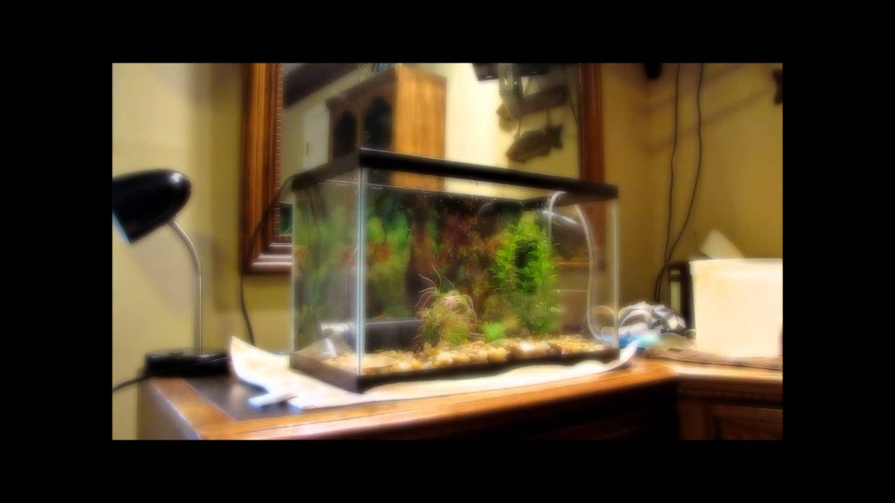 Turtle tank what you need turtle tank for the well being for Well water for fish tank