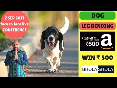 Pet Care -  Dog legs bends if we don't provide suitable floor to our dog - Bhola Shola