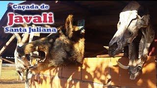 Caçada de Javali - Santa Juliana