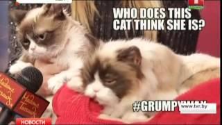 У сердитой кошки Грампи появилась восковая копия!