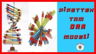 Pipetlerden Tam DNA Modeli  How to Make DNA Model, Using Straws