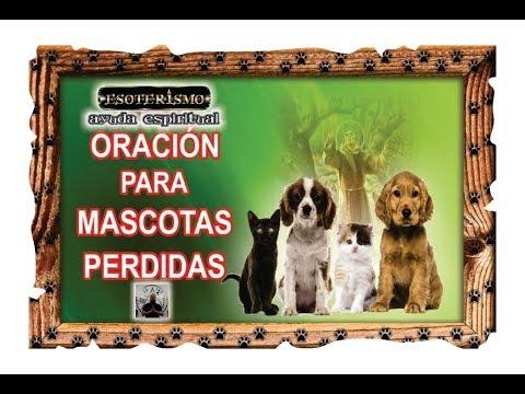 ORACIÓN PARA MASCOTAS PERDIDAS | ESOTERISMO AYUDA ESPIRITUAL