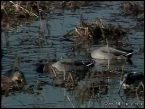 Blackwater Refuge Episode 01