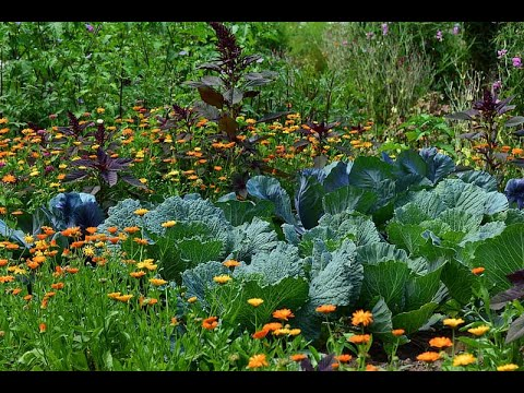 Culture & Identity In France. Gardening, Homesteading, And More With Thierry Durolle