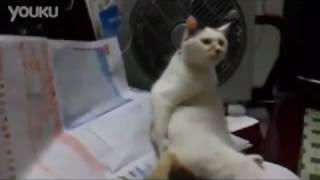 Кот чешет попу
