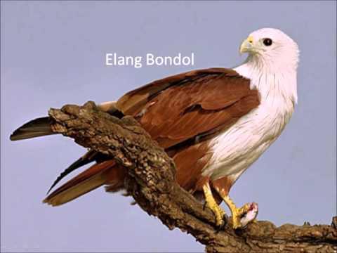 Fauna Hewan Asli Indonesia Yang Langka dan Hampir Punah