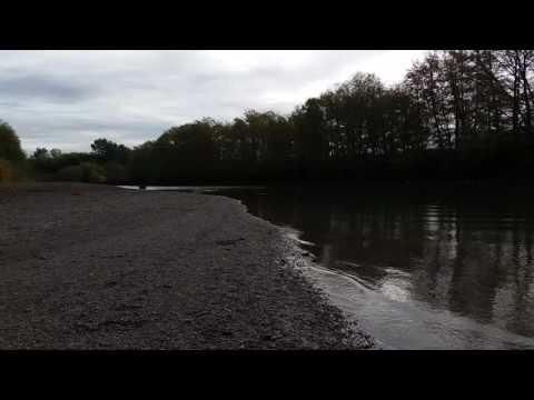 Poaching/Netting Salmon On The Nooksack River