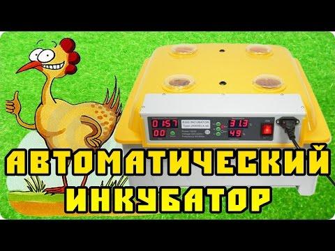 Автоматический китайский инкубатор на 48 куриных яиц
