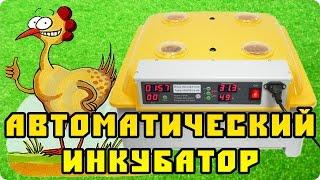видео Инкубаторы КИТАЙ