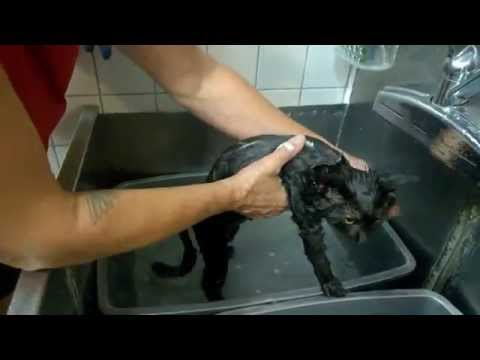 Kitty Harbor Cat Care: Bathing a Cat