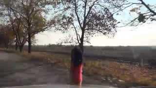 Вишневе Vyshneve Аули Auly H08 Україна Ukrai…