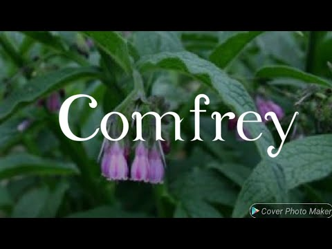 Comfrey and it's Benefits