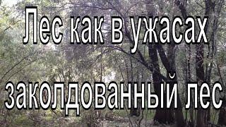 Мрачный лес. Новосибирск. Лес из ужасов.Scary forest. Novosibirsk. Forest of horrors.